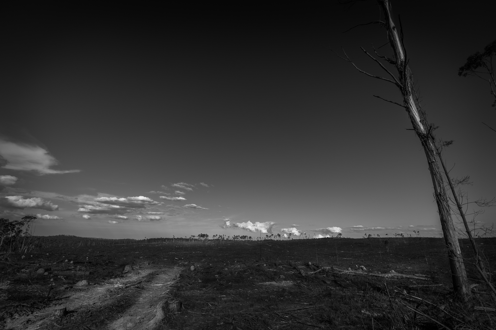 Black and white landscape photograph of recently harvested plantation forest
